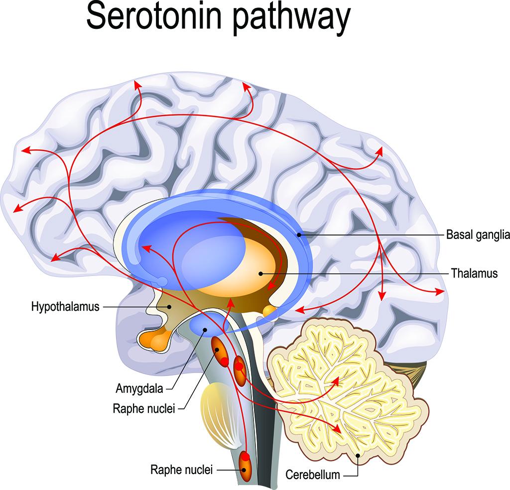 SSRI Infographic